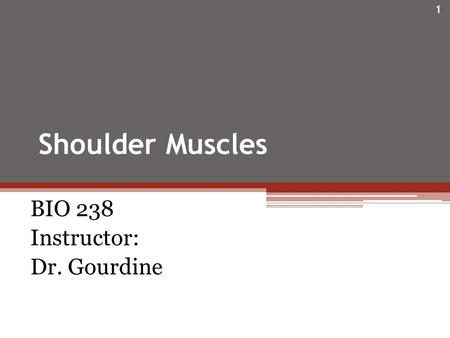Shoulder Muscles BIO 238 Instructor: Dr. Gourdine 1.