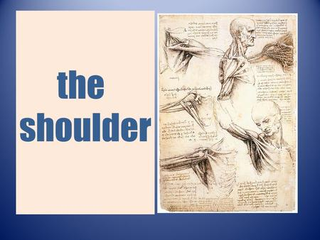 The shoulder. The shoulder  Passive elements  Active elements.