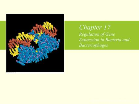 Chapter 17 Regulation of Gene Expression in Bacteria and Bacteriophages Copyright © 2010 Pearson Education Inc.