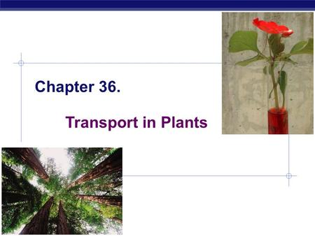 AP Biology Chapter 36. Transport in Plants AP Biology Transport in plants  H 2 O & minerals  Sugars  Gas exchange.