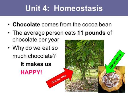 Unit 4: Homeostasis Chocolate comes from the cocoa bean