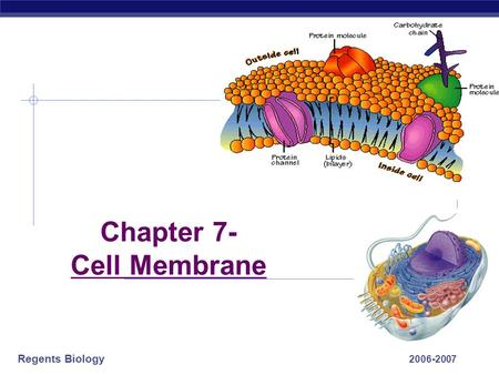 Regents Biology 2006-2007 Chapter 7- Cell Membrane.