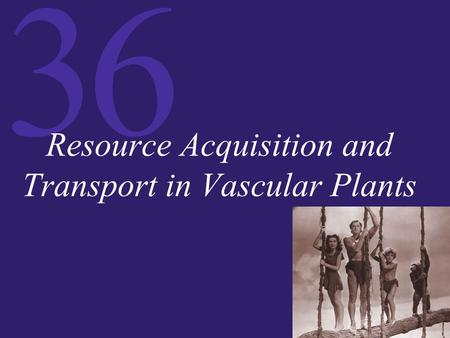 36 Resource Acquisition and Transport in Vascular Plants.