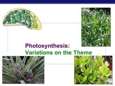 AP Biology Photosynthesis: Variations on the Theme.