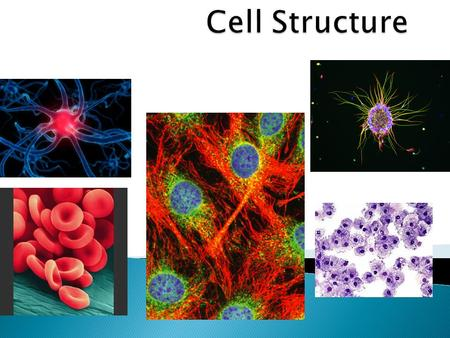 2 3  Cell : a cell is a basic unit of structure and function of life. In other words, cells make up living things and carry out activities that keep.