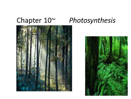 Chapter 10~Photosynthesis The chloroplast Photosynthesis Light reactions – light-dependent reactions – energy conversion reactions convert solar energy.