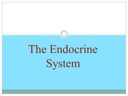 The Endocrine System. Warm-up What is the purpose of the endocrine system? Why do we need it?