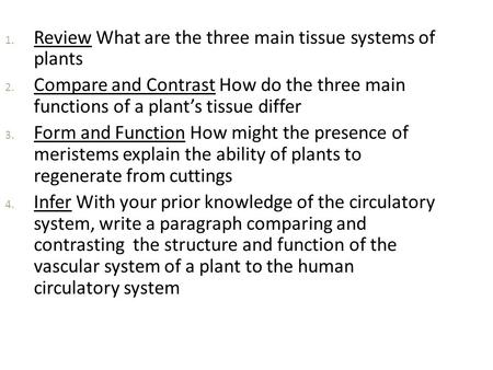Review What are the three main tissue systems of  plants