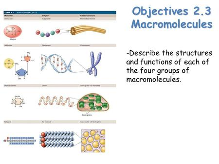 Objectives 2.3 Macromolecules