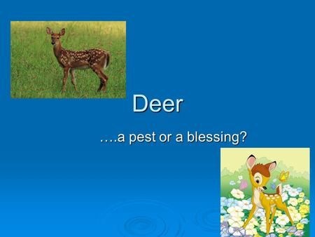 Deer ….a pest or a blessing?. General Facts about Deer  Deer are members of the order Artiodactyls.  Deer can be found all around the world; except.