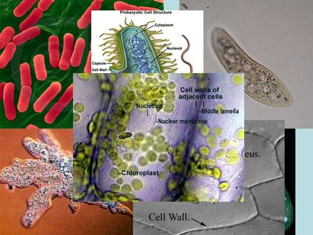 CH. 3 ~ CELLS. Bacteria vs. Viruses Living cells vs. non-living protein and nucleic acids Ch. 18 Pages 331-353.