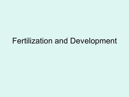 Fertilization and Development Ovulation is when the egg is released from the follicle.