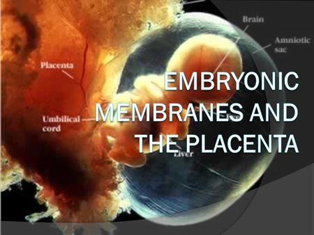 Embryonic Membranes and the Placenta