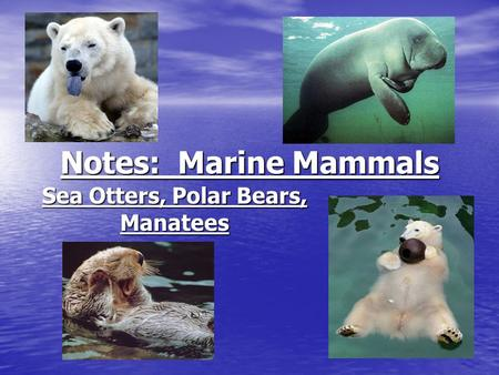 Notes: Marine Mammals Sea Otters, Polar Bears, Manatees.