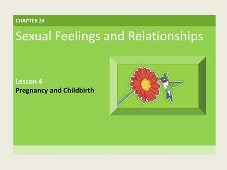CHAPTER 24 Sexual Feelings and Relationships Lesson 4 Pregnancy and Childbirth.