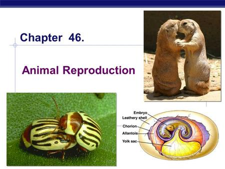 AP Biology 2005-2006 Animal Reproduction Chapter 46.
