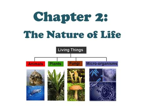 Chapter 2: The Nature of Life. 2.1 Characteristics of Living Things Organism: Another name for a living thing.