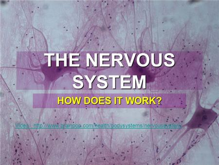 THE NERVOUS SYSTEM HOW DOES IT WORK?