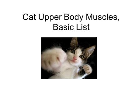 Cat Upper Body Muscles, Basic List. Pectoralis Major Courtesy of Dr. Fankhauser, used with permission,