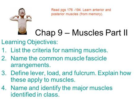 Chap 9 – Muscles Part II Learning Objectives: 1.List the criteria for naming muscles. 2.Name the common muscle fascicle arrangements. 3.Define lever, load,