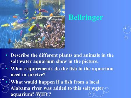 Bellringer Describe the different plants and animals in the salt water aquarium show in the picture. What requirements do the fish in the aquarium need.
