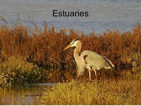 Estuaries. Estuaries are partially enclosed coastal bodies of water Examples of estuaries include: –River mouths –Bays –Inlets –Gulfs –Sounds Formed by.
