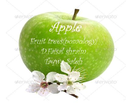 Apple Fruit trees(pomology) D.Faisal shraim Taqwa Saleh.