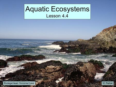 Aquatic Ecosystems Lesson 4.4 Bodega Head, Sonoma Coast M. Parker.