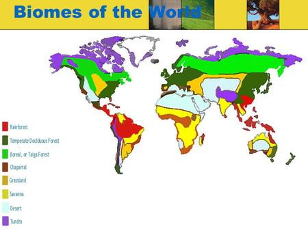 Biomes of the World. What is a biome? A BIOME is the largest geographic biotic unit, a major community of plants and animals with similar life forms and.