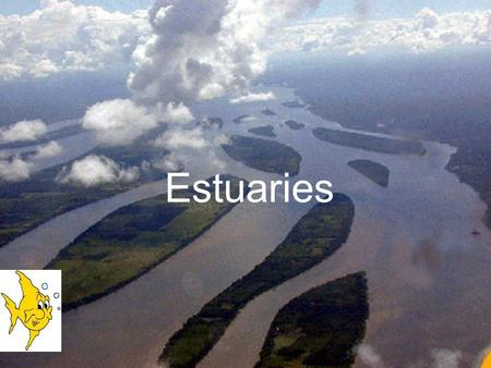 Estuaries. What is an estuary, you may ask? An estuary is the area where a river and an ocean meet. In an estuary the water is a mixture of salt water,