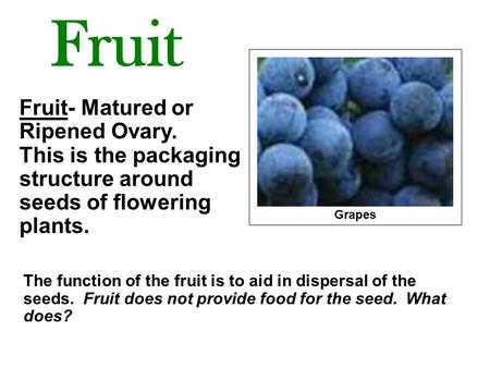 Fruit Fruit- Matured or Ripened Ovary. This is the packaging structure around seeds of flowering plants. Grapes The function of the fruit.