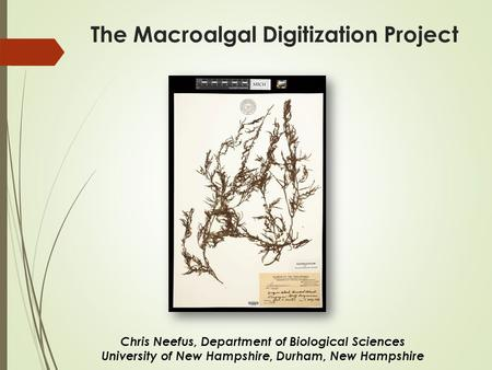 The Macroalgal Digitization Project Chris Neefus, Department of Biological Sciences University of New Hampshire, Durham, New Hampshire.