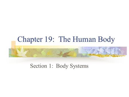 Chapter 19: The Human Body Section 1: Body Systems.
