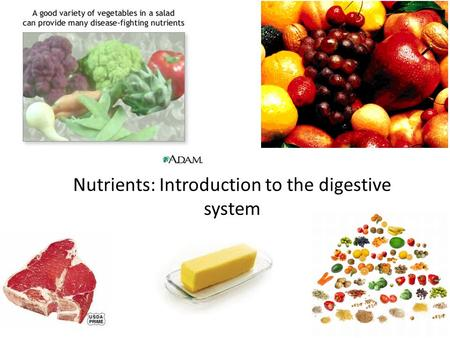 Nutrients: Introduction to the digestive system. NEWS You will have a quiz on Monday on the Skeletal System, Muscle System, and Skin. – Study your notes.