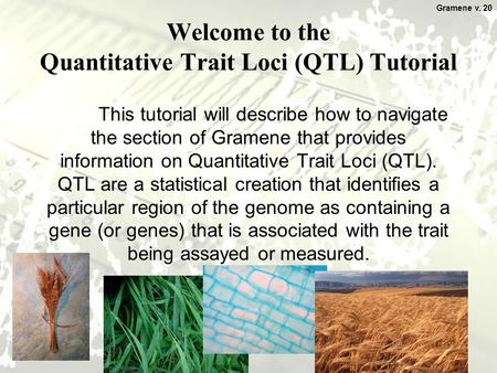 1 Welcome to the Quantitative Trait Loci (QTL) Tutorial This tutorial will describe how to navigate the section of Gramene that provides information on.