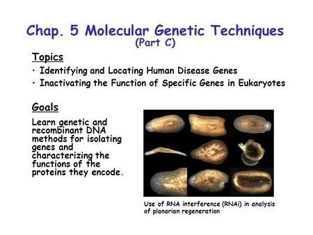 Chap. 5 Molecular Genetic Techniques (Part C) Topics Identifying and Locating Human Disease Genes Inactivating the Function of Specific Genes in Eukaryotes.