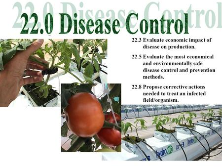 22.3 Evaluate economic impact of disease on production. 22.5 Evaluate the most economical and environmentally safe disease control and prevention methods.