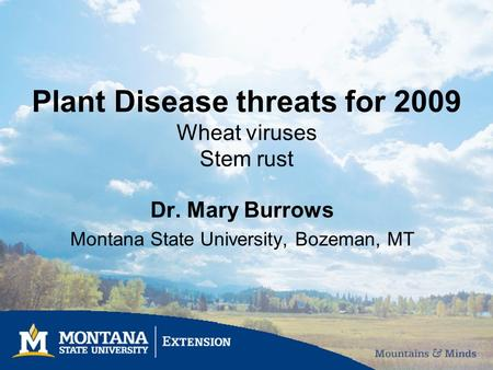 Plant Disease threats for 2009 Wheat viruses Stem rust Dr. Mary Burrows Montana State University, Bozeman, MT.