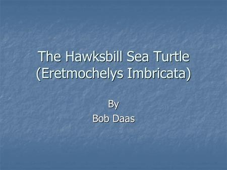 The Hawksbill Sea Turtle (Eretmochelys Imbricata)