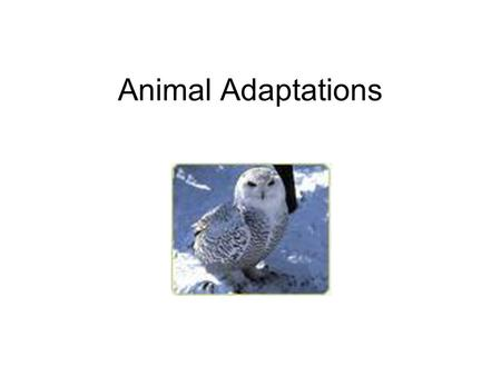 Animal Adaptations. Body Parts Beaks Finches have different kinds of beaks depending on what they eat. A house finch eats fruit – it has a short, stubby.