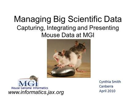 Managing Big Scientific Data Capturing, Integrating and Presenting Mouse Data at MGI Cynthia Smith Canberra April 2010 www.informatics.jax.org Mouse Genome.