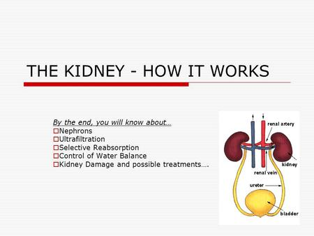 THE KIDNEY - HOW IT WORKS
