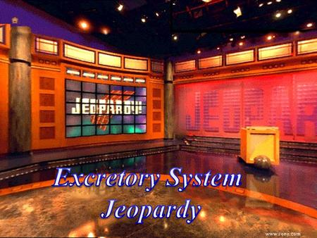 Course Guide Jeopardy 100 200 100 200 300 1200 1500 300 400 500 100 200 300 400 500 100 200 300 400 1000 100 200 300 400 500 Excretory System KidneyParts.