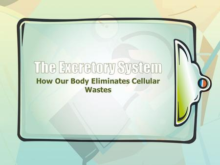 How Our Body Eliminates Cellular Wastes. Excretion When proteins are broken down into amino acids, during digestion, they travel to the liver to be stored.
