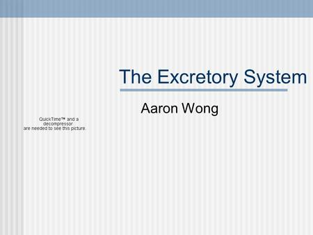 The Excretory System Aaron Wong. What does it do? Every cell produces metabolic wastes such as: Salt Carbon dioxide Urea (toxic compound produced when.
