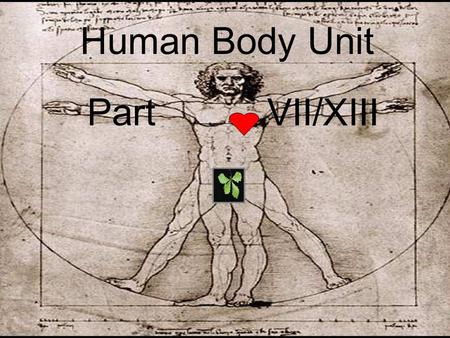 Human Body Unit Part VII/XIII. Human Body Unit Part VII/XIII.