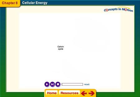 Chapter 8 Cellular Energy.