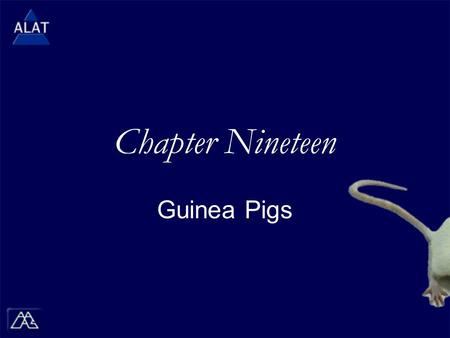 "Chapter Nineteen Guinea Pigs.  If viewing this in PowerPoint, use the icon to run the show (bottom left of screen).  Mac users go to ""Slide Show > View."