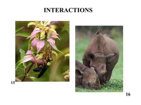 intraspecific competition the response of the What mediates intraspecific competition has consequences for disease  it is  unlikely that paba has a direct impact on the host's response to.