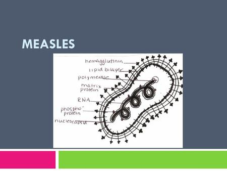 MEASLES. Measles  Highly contagious, acute exanthematous respiratory disease with a typical clinical picture and a characteristic enanthem: Koplik's.